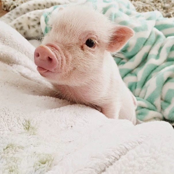 Well, Pearl is all that and more! - The Heartmelting Friendship Of A 2-Year-Old Girl And Her Piglet