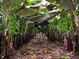 Fecha y horario 15 de mayo de 16 00 a 19 00 horas for Banano de jardin