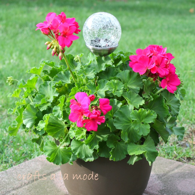 Put a solar light inside a beautiful floral plant as a gift.