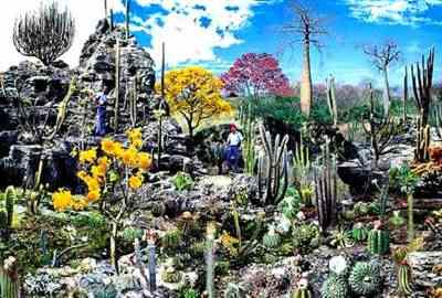 Flora do Bioma Caatinga