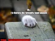funny cats wallpaper funny cats wallpaper