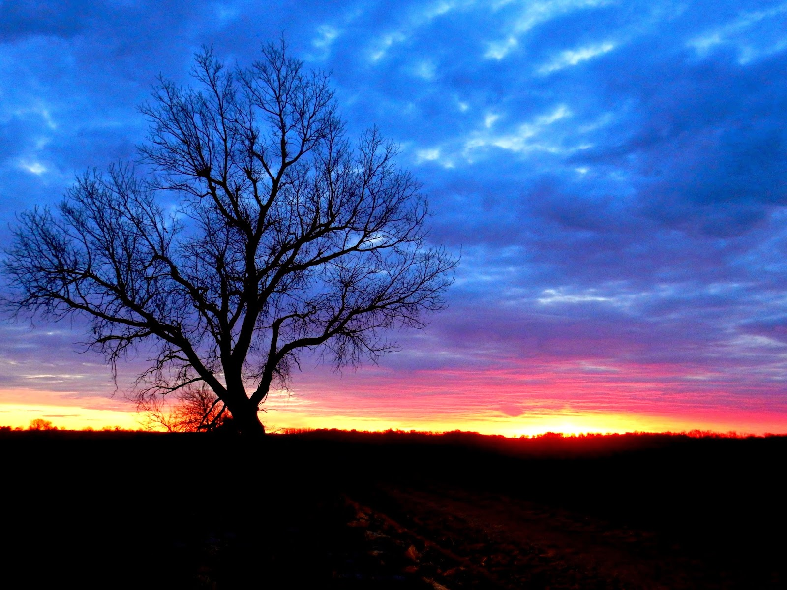 Kim\'s County Line: Perspective at the Sunrise Tree