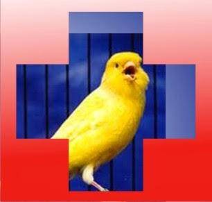 P3K Pada Burung Macet