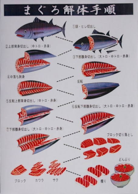 Japanese poster illustrating the deconstruction of a blackfin tuna for sushi. step-by-step, all the different parts of the fish. in japanese, MAGURO
