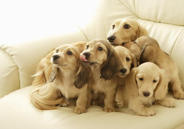 Fondos de Pantalla de Perros Hermosos