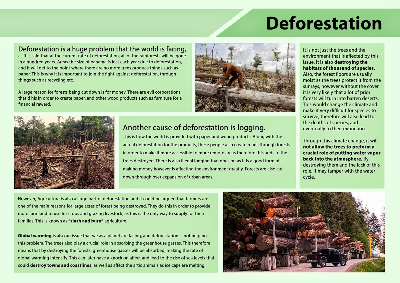 deforestation research essays Deforestation essay 5 (300 words) deforestation is the finishing of the forests by the human beings increasing human population day by day is increasing the need for land on the earth for agricultural, industrial, residential, commercial, cities and other purposes which involves permanent forest removal.