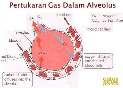 SAINS | Memahami Pengangkutan Oksigen Dalam Badan Manusia