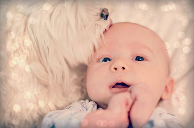 puppy love photography cute baby pictures
