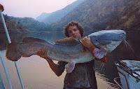 Vundu Catfish