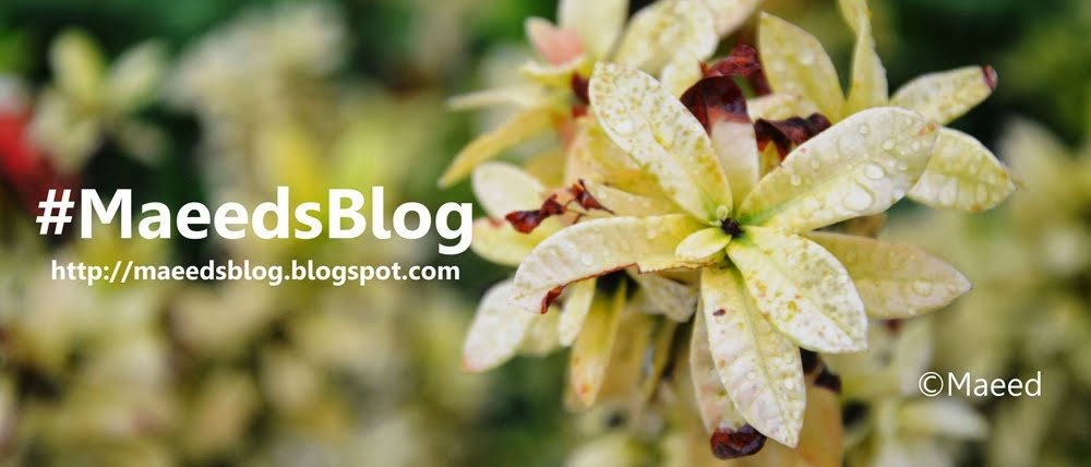 Maeed's Blog