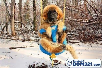 Gambar Anjing-Anjing Main Buaian