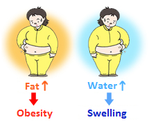 Visual representation of how our size can get larger by increased water absorption, or swelling, as well as increased fat depositing, which can lead to obesity.