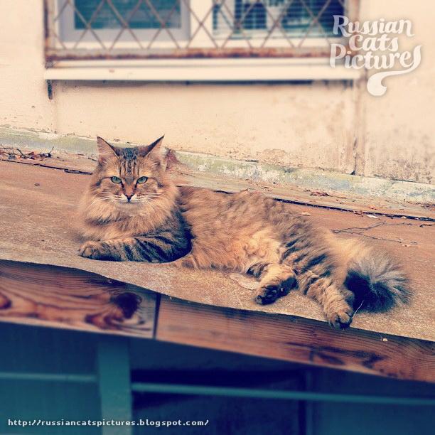 Sad Instacats Cat 13