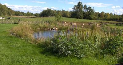 ekologisk baddamm