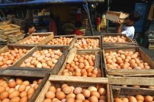 harga telur, harga telur hari ini, harga telur sekarang