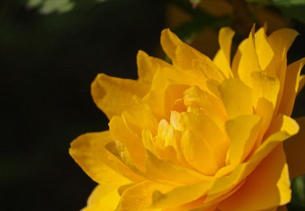 伸び 針 やわらか たる 二 ない 薔薇 の の に 芽 の くれ 尺 ふる 春雨 意味 の