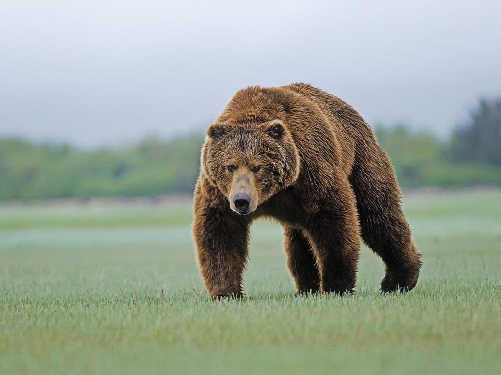 http://2.bp.blogspot.com/-cs-ALs2TYkw/TrVjN7TzFDI/AAAAAAAAAx4/zE434Obir48/s1600/bear+wallpaper.jpg