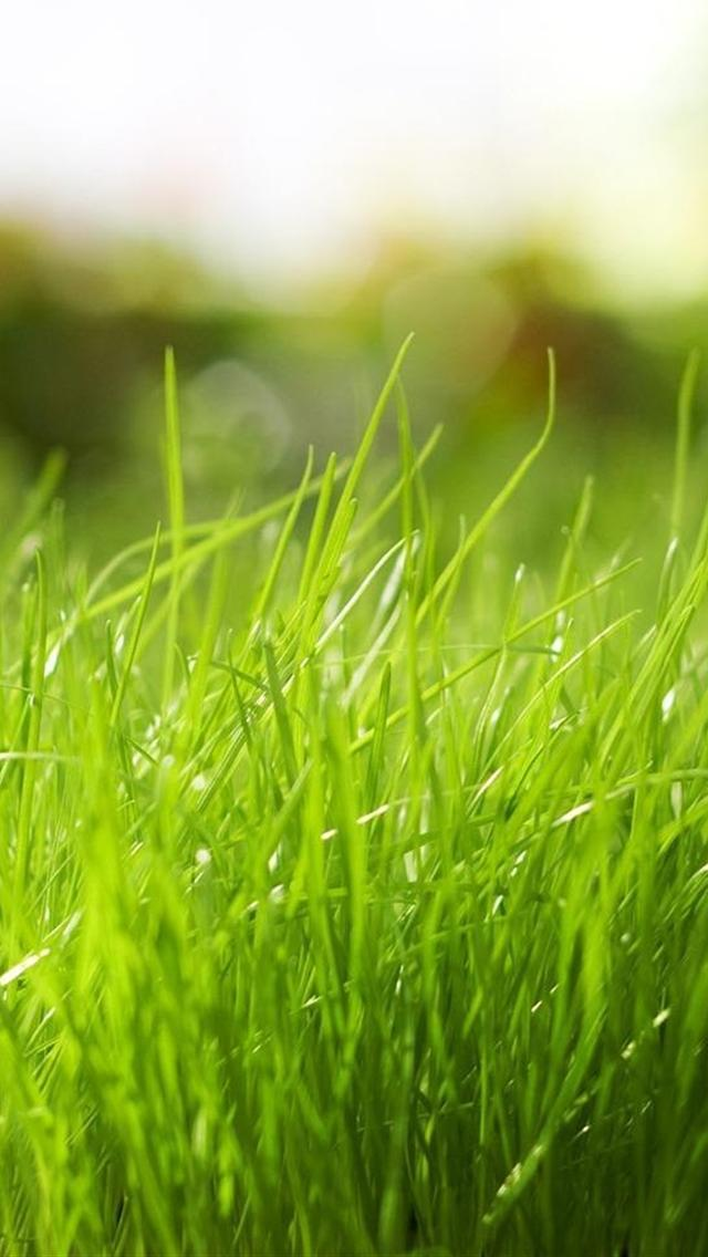 Cute Green Grass Iphone 5 Backgrounds Free