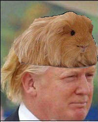 Image result for funniest donald trump hair ever!!!
