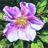 Alberta Rose #1