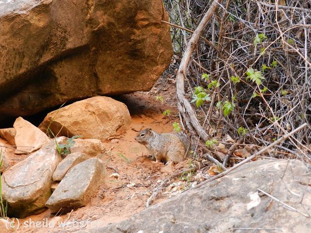 Squirrel keeps his eye on me while I take photos.