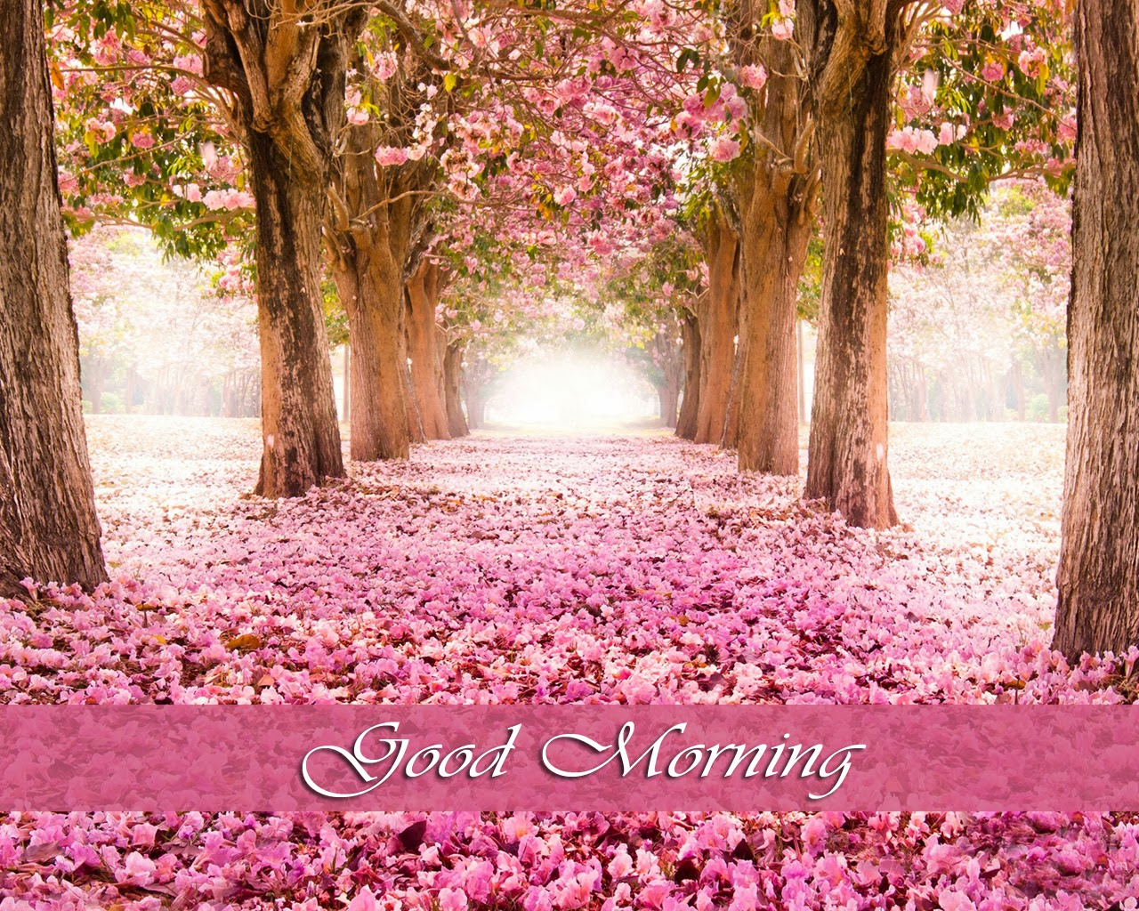 HD: Download High Resolution Wallpapers of Beautiful Morning