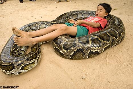 Foto foto ular - Artikel Luarbiasa : Kumpulan Artikel Menarik