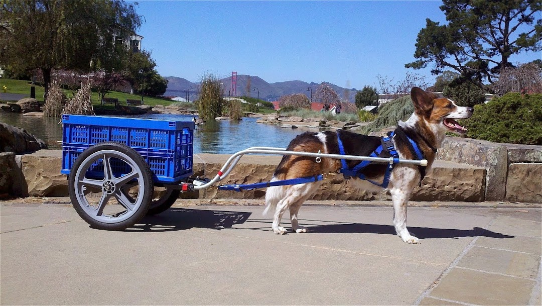 Dino in His Draft Cart at the Presidio in San Francisco