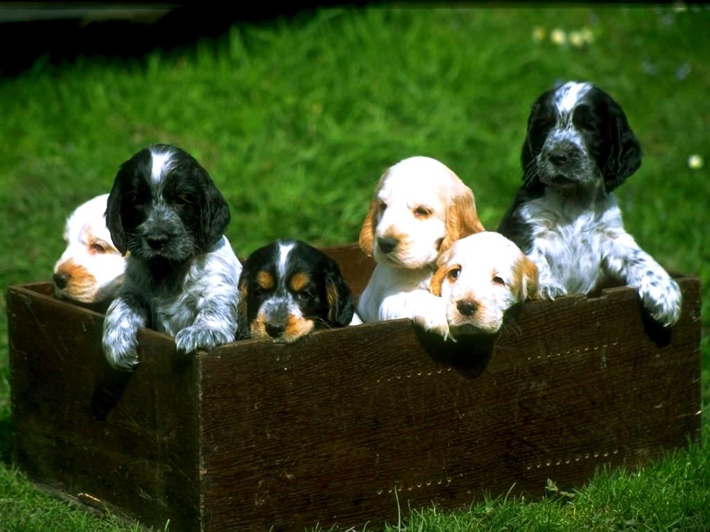 http://2.bp.blogspot.com/-ctS_946OpG0/Tc8bpFuWlZI/AAAAAAAAAAw/JFVaVfNCPCs/s1600/cachorro-filhotes-.jpg