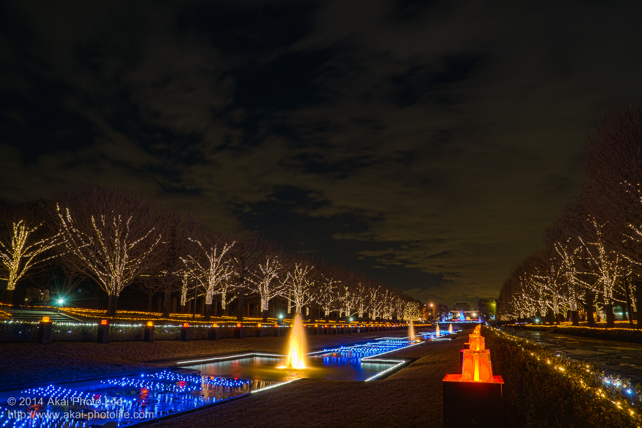 国営昭和記念公園のイルミネーション(WINTER VISTA ILLUMINATION 2014)