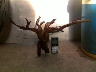 Cara Cepat Menghilangkan Tanin Kayu Bakau, kayu bakau, menghilangkan tanin kayu, kayu bakau aquascape