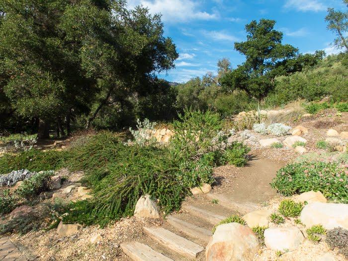 A Winter Visit To Santa Barbara Botanic Garden