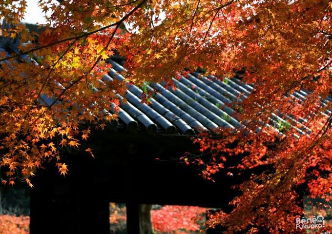 Kuromon, ruines du château d'Akizuki, ville d'Asakura, Fukuoka
