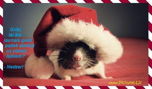 pele rūķu cepurē