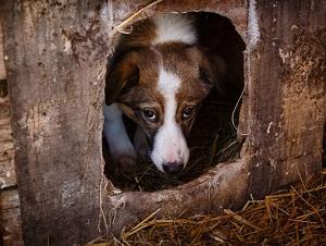Собака выглядывающая из будки