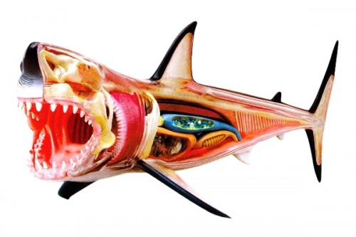 Great White Shark 3D Animated Model Pics !