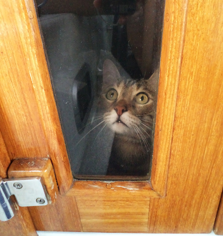 Cat Keeps Hiding In New Home
