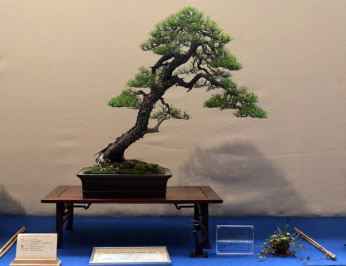 Bonsai Living Art Noelanders Trophy 2013