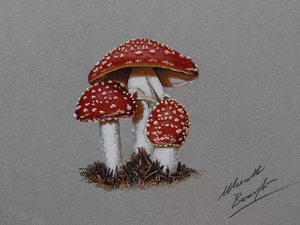 Magic Mushroom Drawings Magical Mushroom Drawing