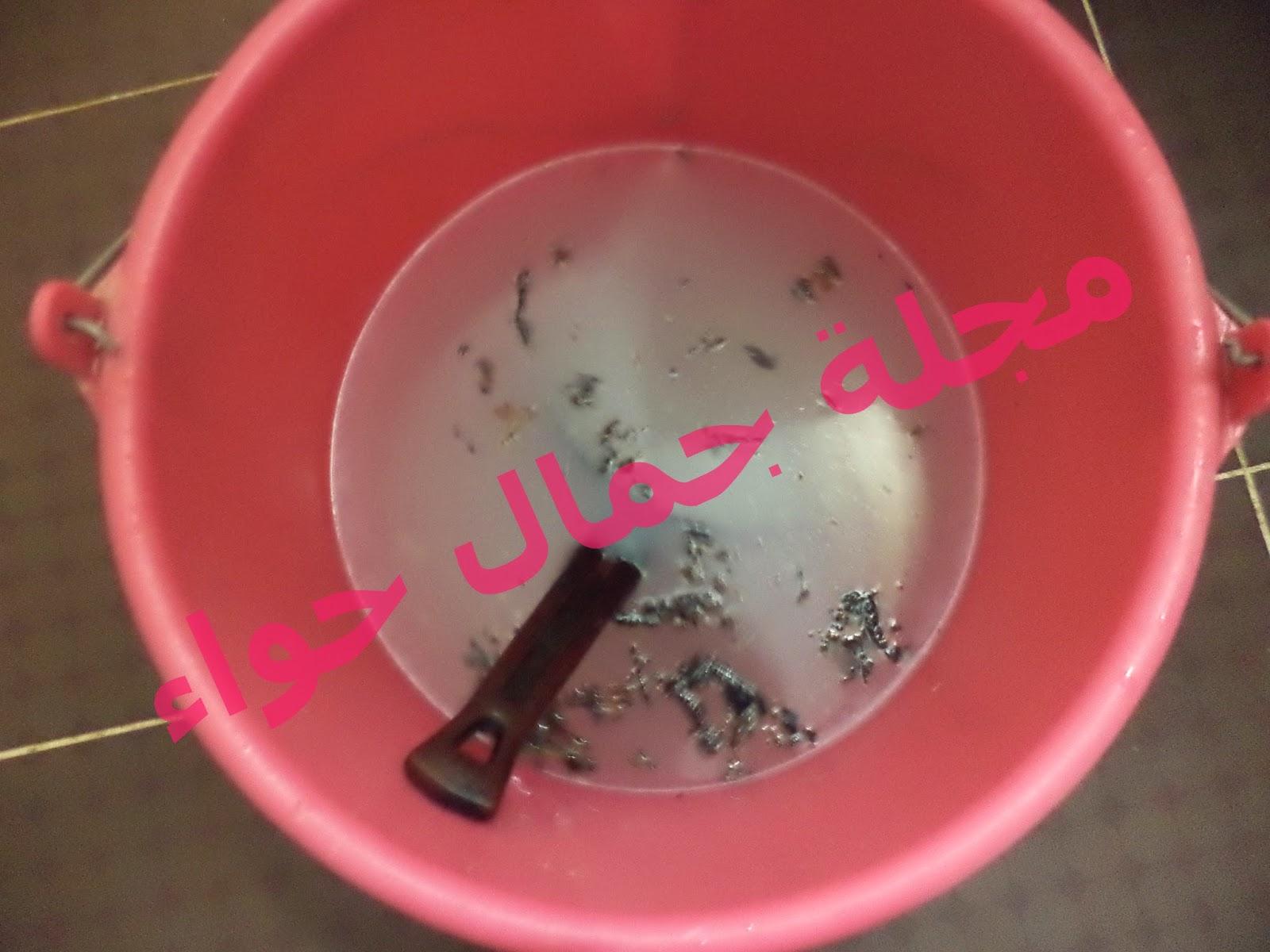 بالصور: طريقة سحرية وبدون مجهود لغسيل وتنظيف وتلميع المواعين