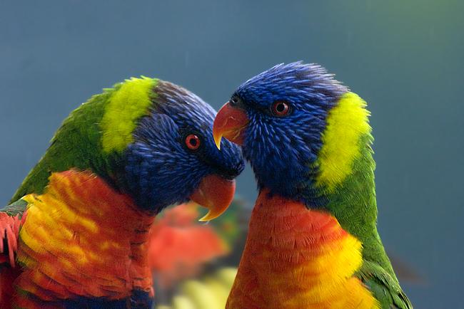 animales con colores increibles