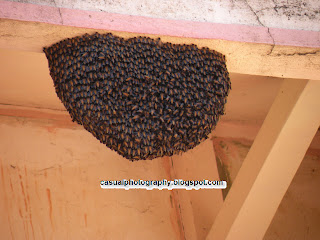 Bee Hive - Karaikudi 1000 Window House