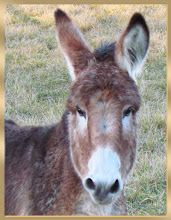 Sweetest Donkey