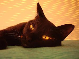 eu sou o gato deste planeta...