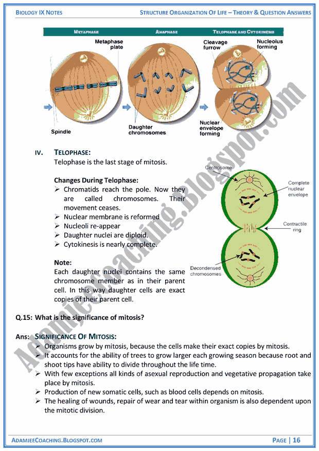 structural-organization-of-life-theory-notes-and-question-answers-biology-notes-for-class-9th