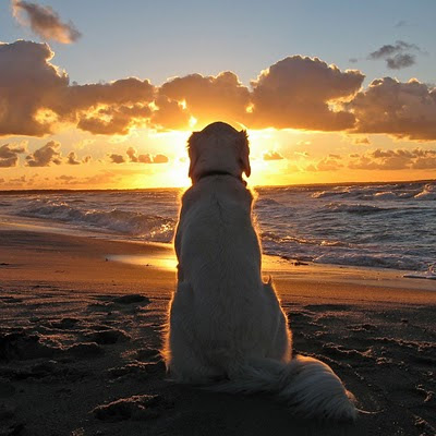 Dog is watching sunset download free wallpapers for Apple iPad