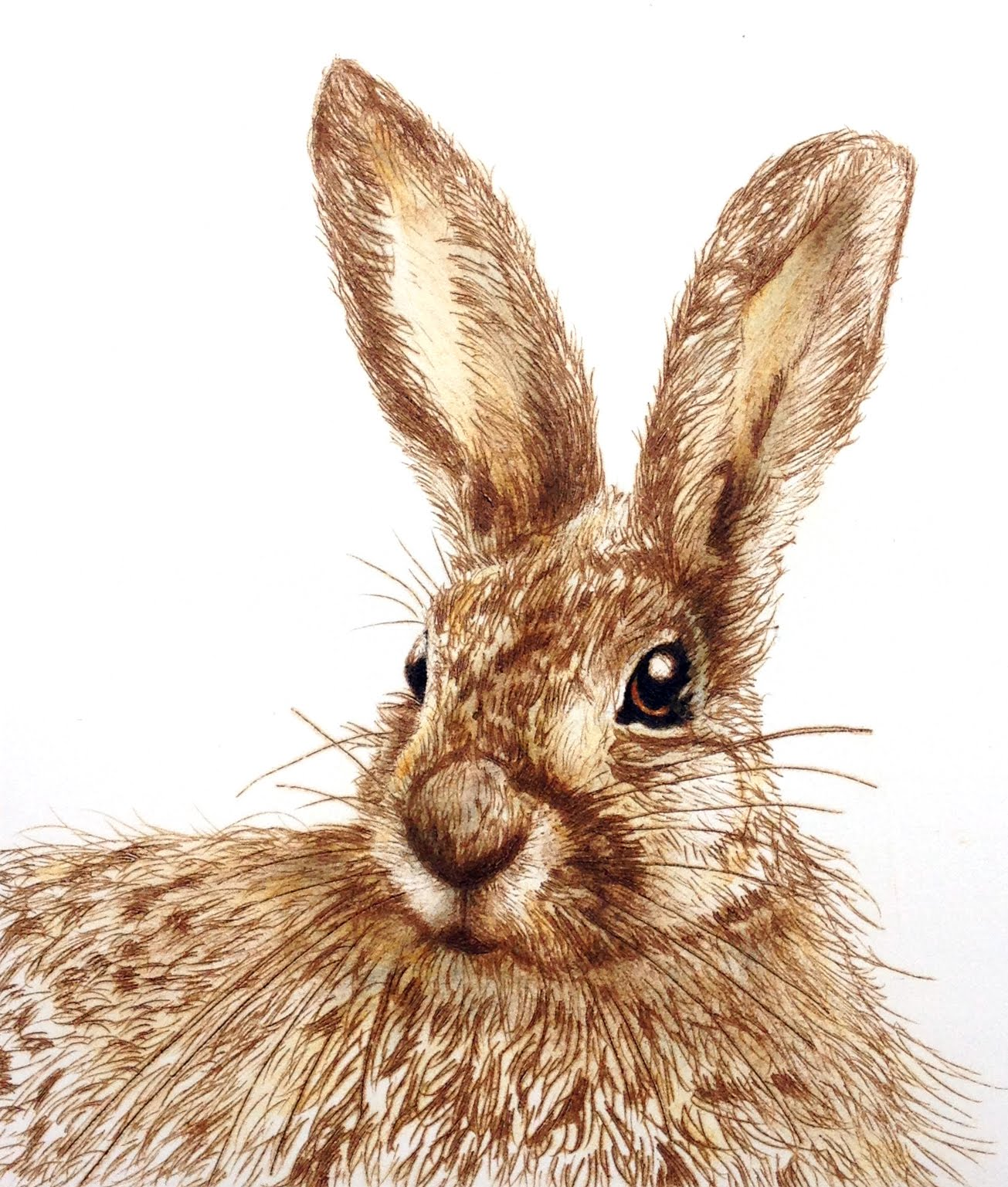 The Curios Hare.