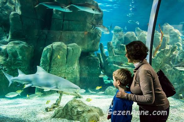 İstanbul Akvaryum'da oğlumla köpekbalıklarını izlerken, Aqua Florya
