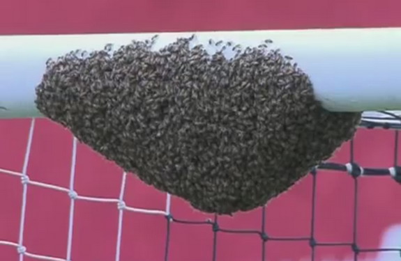 A swarm of bees form an impromptu colony on a crossbar before a football match in Brazil
