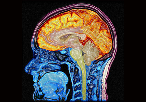 cognitive function the brain Brain health and cognitive function in annapolis, md the mind grows wiser with age, but age adversely blunts a mental edge, diminishes computing power and causes memories to fade it doesn't have to be that way though anti-aging professionals may.